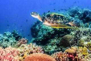 Gili Air Indonezja wakacje wycieczki egzotyczna podroz najpiekniejsze wyspy ciekawe miejsca