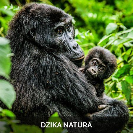 dzika-natura