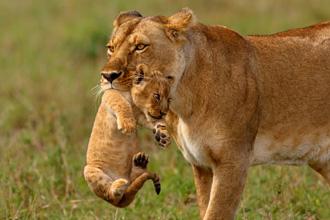 Serengeti, Tanzania, safari, tanzania wycieczka, tanzania wczasy, tanzania wakacje, wakacje w tanzanii