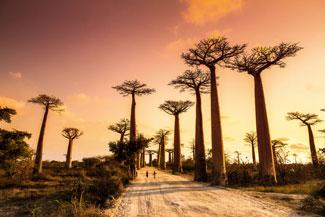 Aleja Baobabow Madagaskar wakacje wycieczki