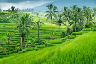 Bali Indonezja wakacje wycieczki egzotyczna podroz ciekawe miejsca