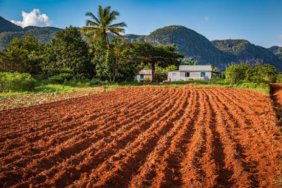 Vinales, Kuba, plantacje tytoniu