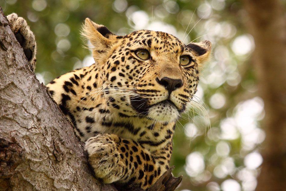 safari, wakacje wśród dzikiej natury