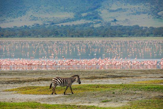 Jezioro Manyara, Tanzania