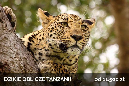 Dzikie Oblicze Tanzanii