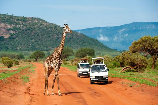 Tsavo,Kenia