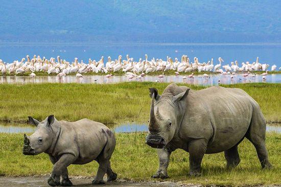 Nakuru,Kenia