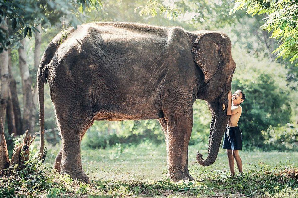 tajlandia-slon
