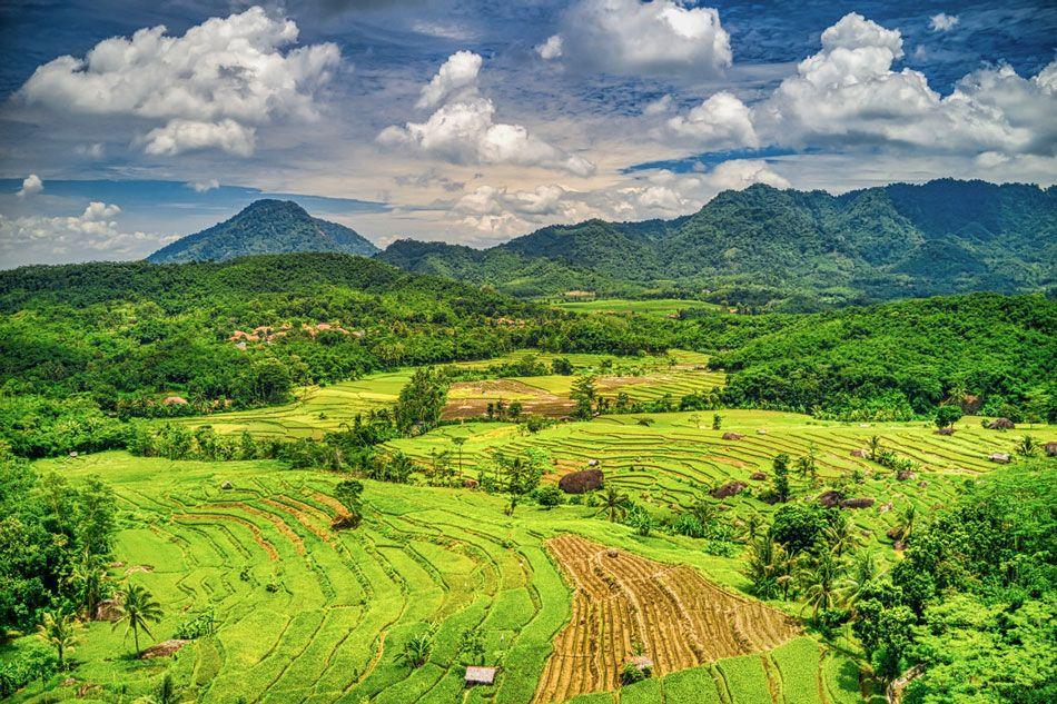 indonezja-pola