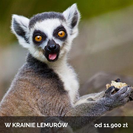 W krainie Lemurów