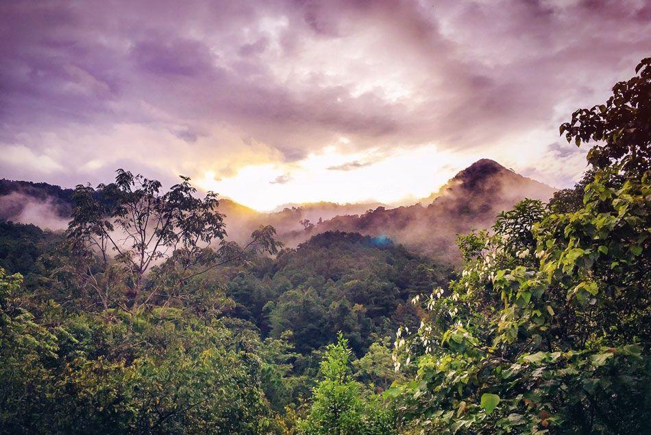 madagaskar-rainforest