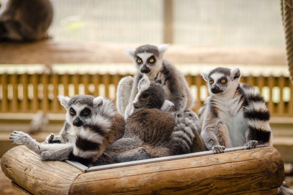 wakacje na Madagaskarze
