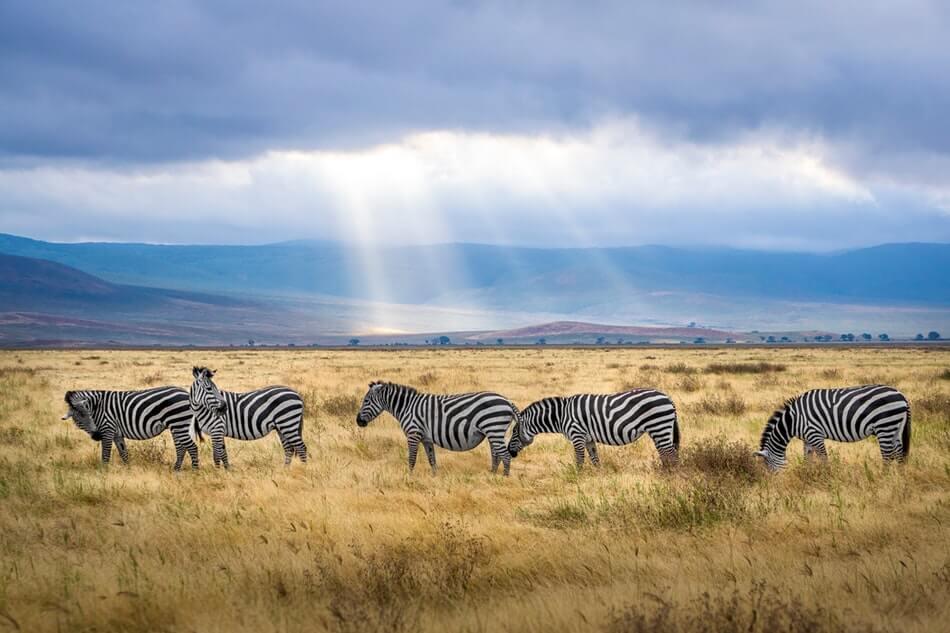 bezpieczeństwo w Tanzanii