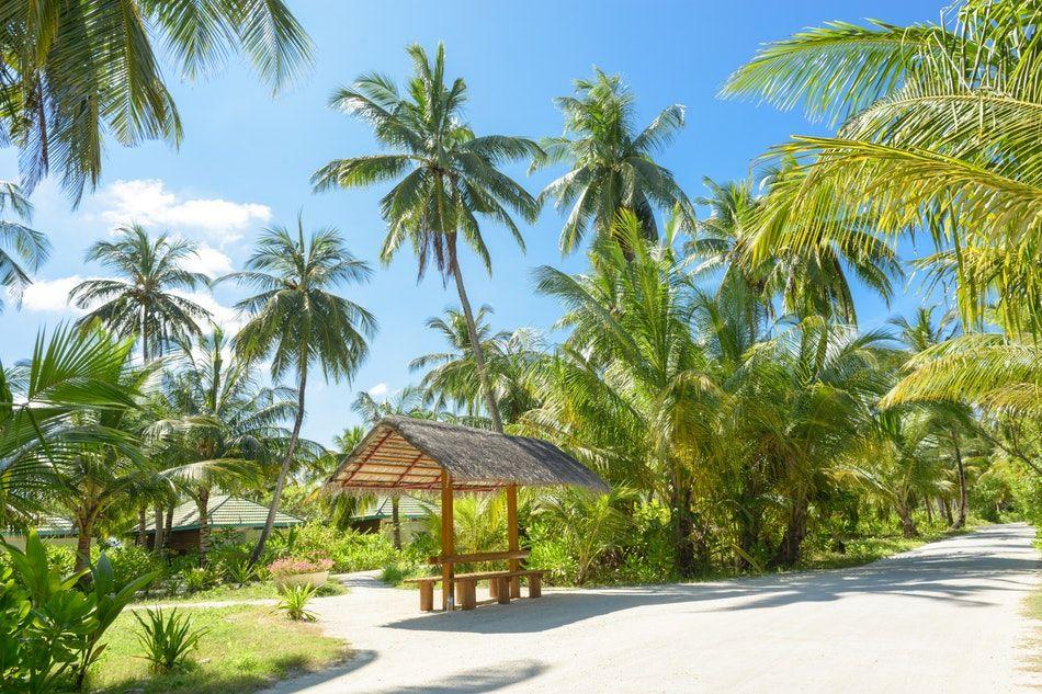 egzotyczne wakacje na Zanzibarze