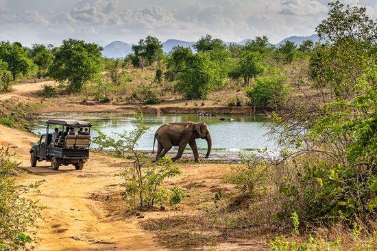 Sri Lanka, Udawalawe