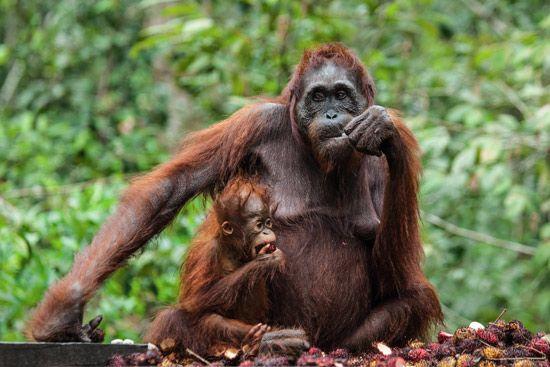 Malezja, Borneo