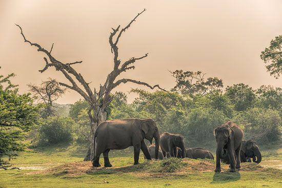 Sri Lanka, Yala
