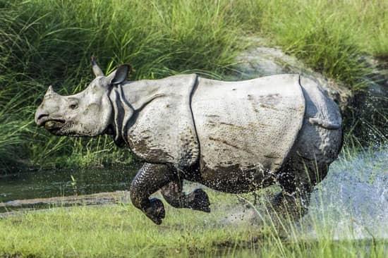 Nepal, Chitwan