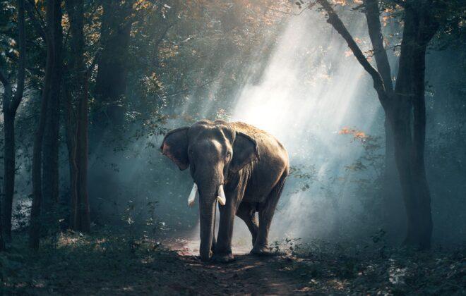 Słonie Sri Lanka