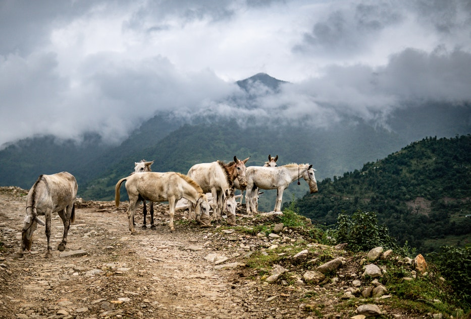 podróż do Nepalu