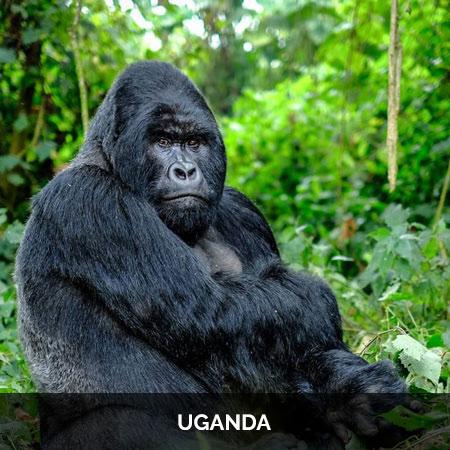 uganda-baner-m