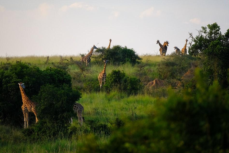 podróż do Afryki