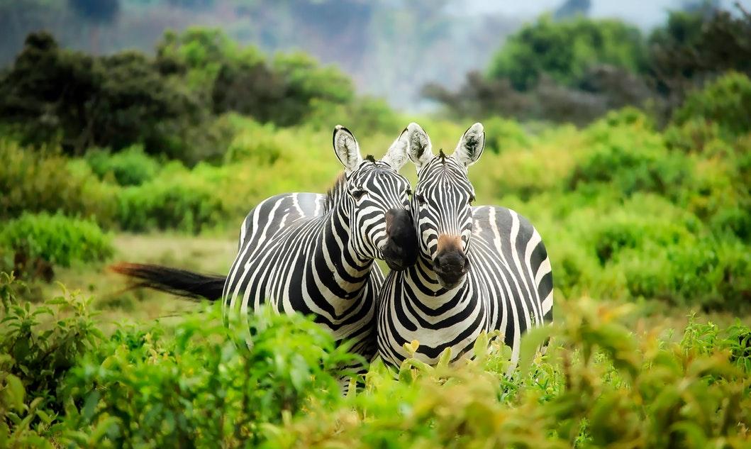 Afryka safari